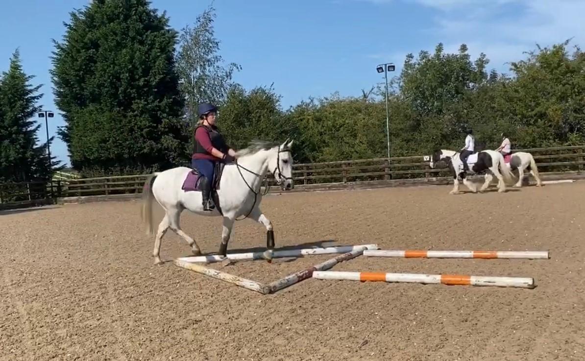 Polework for horses